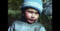Bærplukning i Qaqortoq