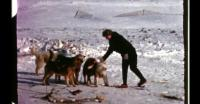 Fun with dogsledding in Qaanaaq