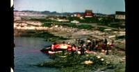 Hvalslagtning i Nuuk